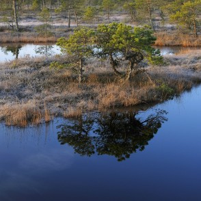 Swamp Lakes, Reflection In Water