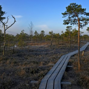 Spring morning in the Great Kemeri Bog