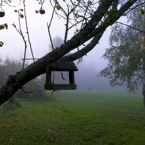 Foggy morning with bird feeder