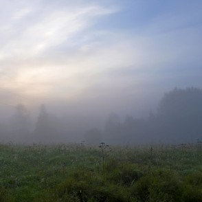 Foggy summer sunrise