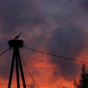 Stork in nest on sunset