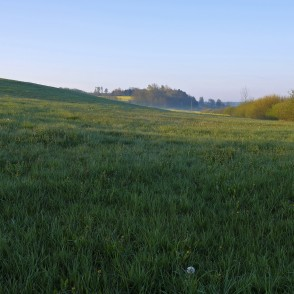 Meadow In The Morning Light
