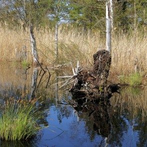 Natural Peat Pits In The Ķemeri Bog