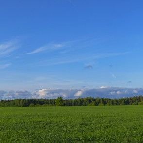 Countryside Panorama, Cereal Field