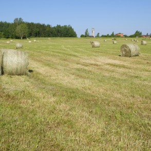 Meadow with Hay Rollers