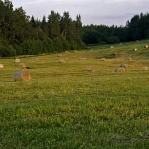 Meadow With Hay Rolls