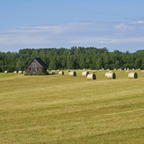 Rural Landscape and Hay Rollers