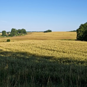 Landscape With A Cereal Field