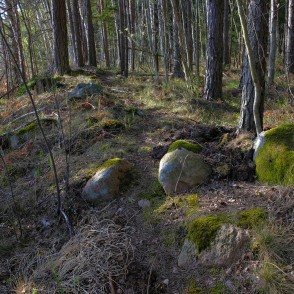Stones in the Forest