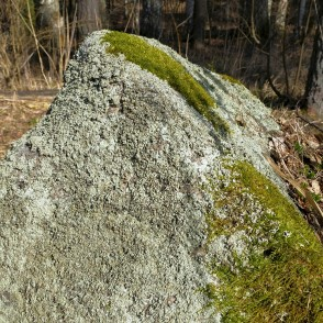 A Stone Overgrown With Moss And Lichens