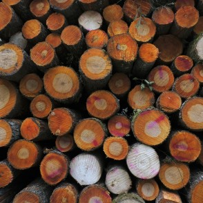 Growth Rings of Black Alders