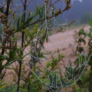 Dew on a Spider Web