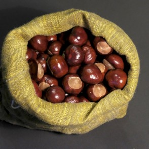 Horse-chestnut fruits
