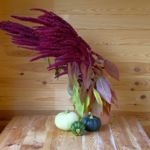 Still Life with Amaranth and Pumpkin