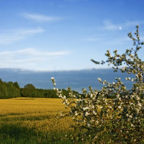 Landscape with apple and rape fields