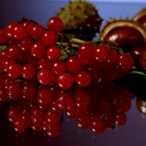 Guelder Rose Fruits and Conkers