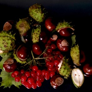 Conkers and Guelder Rose Fruits