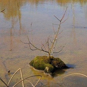 Small Tree In Ķemeri Sulphur Ponds
