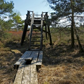 Viewing Platform In Nida Bog