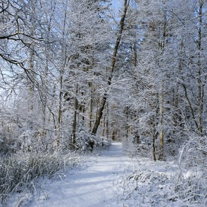 Snowy Trail in Ozolnieki Forest