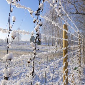 Snow-covered Wire Fence Mesh