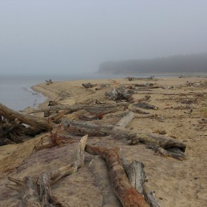 Tree trunks washed ashore near the Rivermouth of Gauja