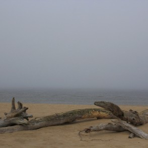 Tree Trunks washed ashore in a Foggy Day