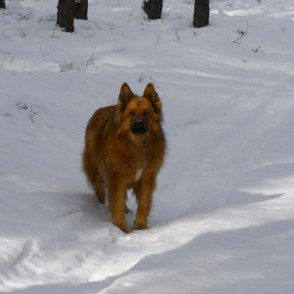 Dog in winter, in forest