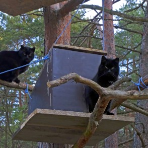 Black Cats in Tree